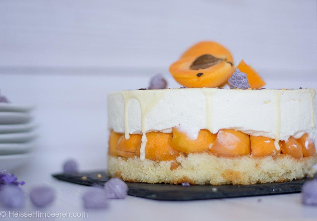 Die Aprikosentorte von der Seite. Eine Lage der Torte ist nur Aprikosen
