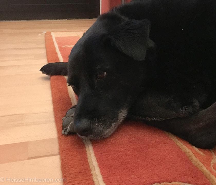 Unser Hund Coco