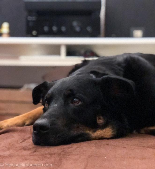 Unser Hund Akyra